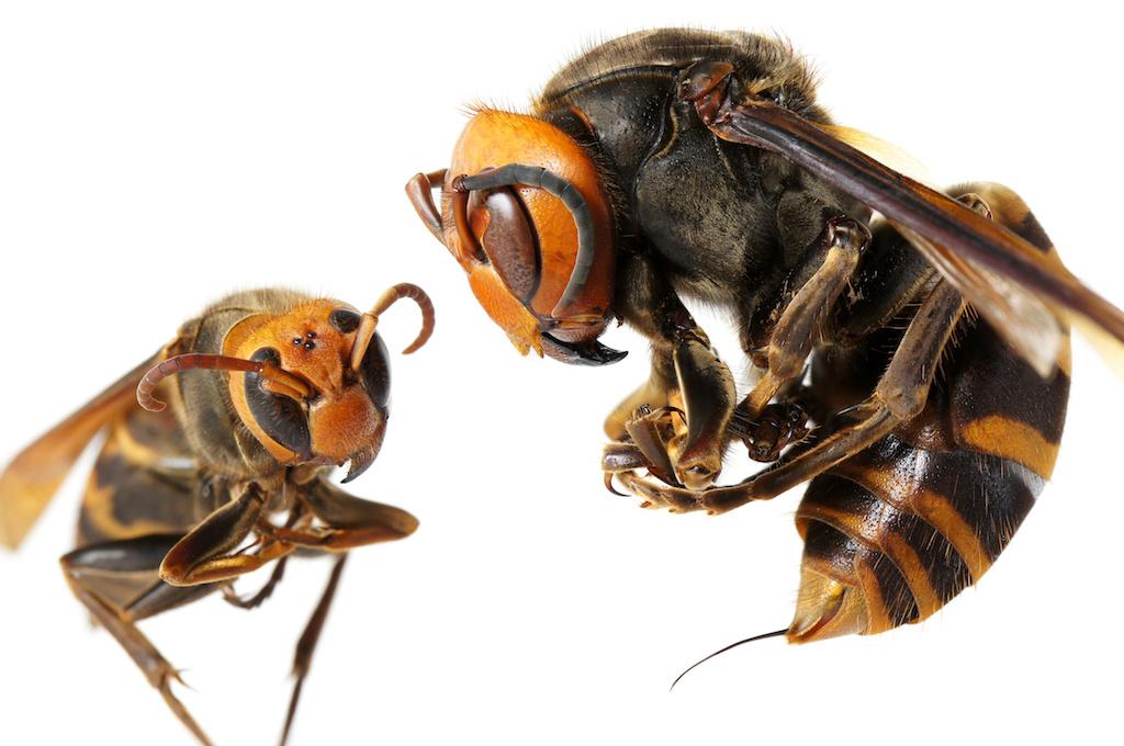 ハチが刺す瞬間