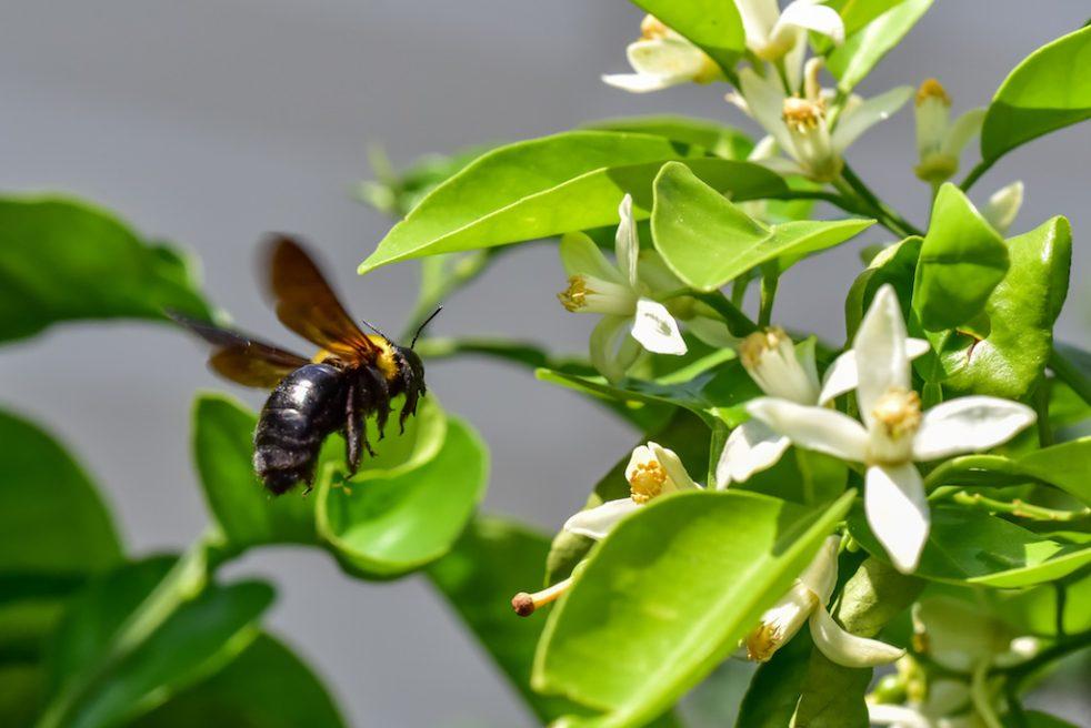 蜜を吸うハチ